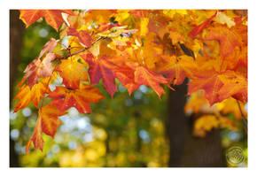 Beautiful fall colours by kuzjka