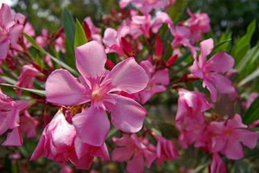 Flower by nagehan
