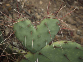 A prickly heart is hard to embrace... by Thastygliax