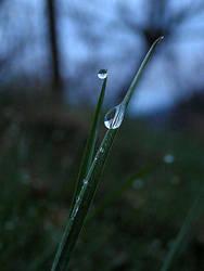 drops... by knubbeldings