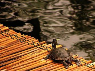 turtle by knubbeldings