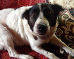 Penny the dog by shadowsmyst