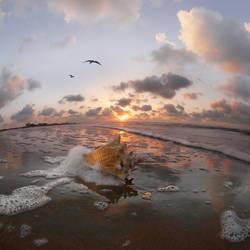 seashell by foureyes