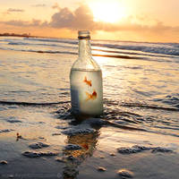 If I could save time in a bottle by foureyes