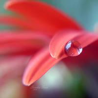 Gentle by SandraSaar