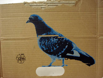 Pigeon 01 by luisabaeta