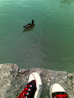 duck and shoes by greenxin