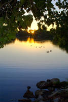 Ducks On Green Lake by monroeart