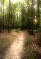 Forest Path by monroeart