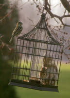 Squirrel-Proof Feeder by monroeart