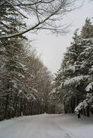 Winter Walk by monroeart