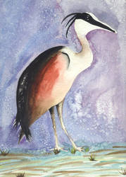 Watercolor Stork by scamper
