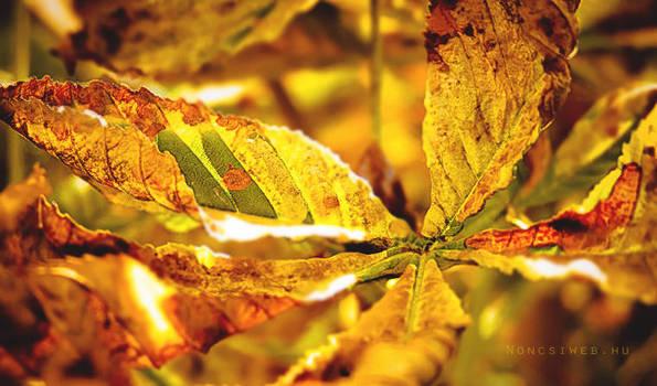 Autumn colors by Noncsi28