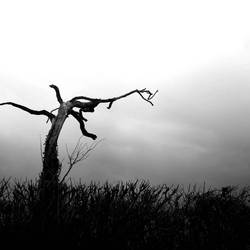 eerie tree, moody clouds by wozza79