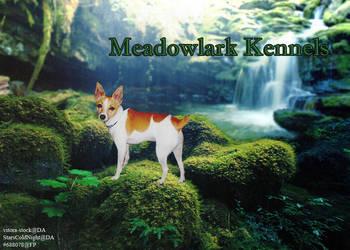 meadowlark kennels tft manip by greensmurfsdontlie