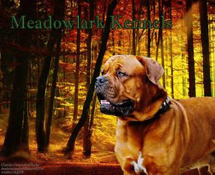 meadowlark kennels ddg manip by greensmurfsdontlie