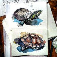 Turtle Cards by FinchFight