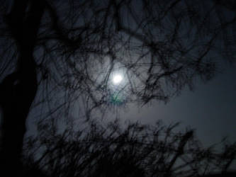 Under a Silver Moon by mimir