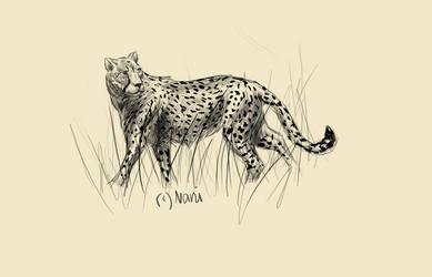 Cheetah for Thalia by Elhanna