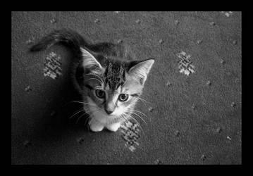 Kitten by electrophiliac