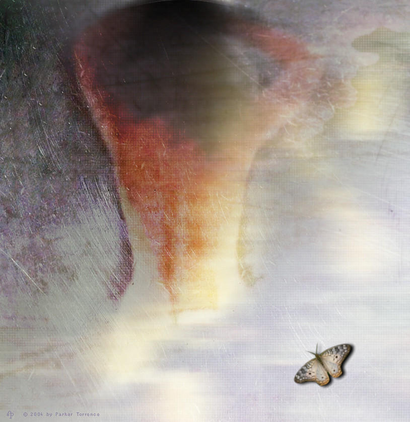 Butterfly Dream by parkerunfolded