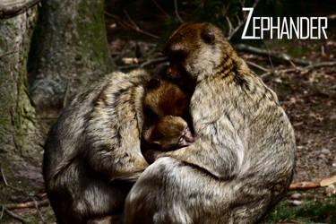 Family Portrait by Zephander