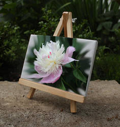 Peony Flower by Canadragon