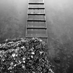 Dock + Water + Seaweed by skierscott