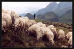 Shepherd life... by LeMarquis