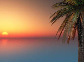 Palm Tree Sunset by akaPREDADOR