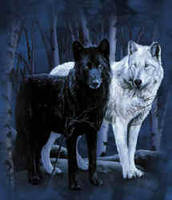 wolves by shockmyworld12