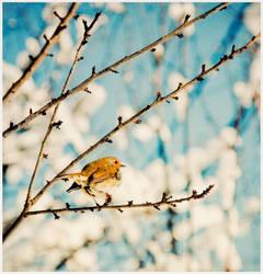 25. :The friendly Robin: by bittersweetvenom
