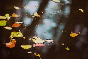 :Fall: by bittersweetvenom