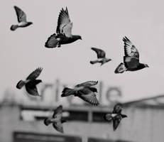 Pigeon Legion by bittersweetvenom
