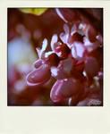 Spring in the 70's II by Z0hra
