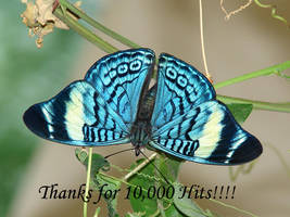 10,000 Thank You by Fezzgator