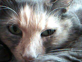 Callie - glamour shot by Tikatu
