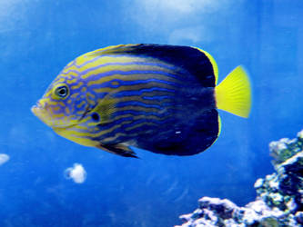 here fishy, fishy by Nipntuck3