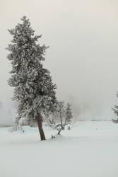 Winter Wonderland by Popstudios