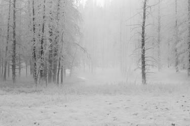 Winter Wonderland 5 by Popstudios