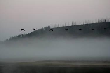 Foggy Beginings by Popstudios