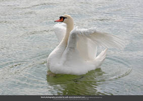 Prancing Swan I by WDH-Stock