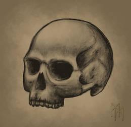 Human skull sketch by Kanayoness
