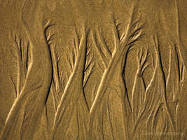 Bronzed Forest by louieschwartzberg