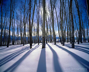 Winter Light by louieschwartzberg