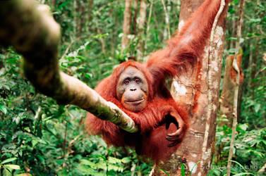 King of the Jungle by louieschwartzberg