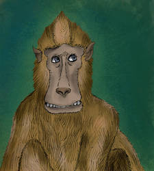 Macaco by ppenafiel73