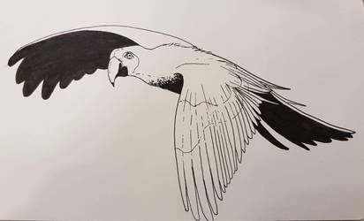 parrot ink by DredaSM