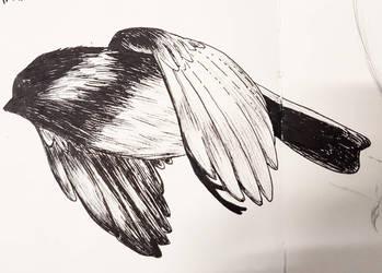 Little bird by DredaSM