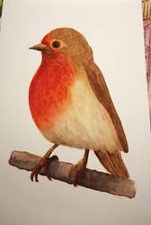 Little Robin by DredaSM